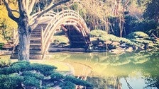 Moon bridge in the Japanese Garden at The Huntington Library